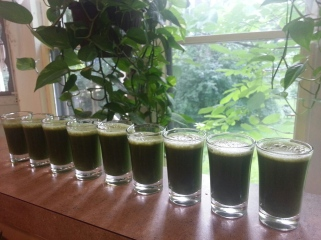 Shots of Wheat Grass!